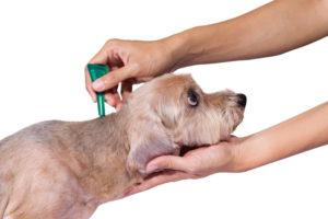 Лучше использовать профилактические средства - противоклещевые ошейники или капли на холку.