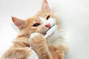 Причиной шишки на щеке может быть стоматологическое заболевание.