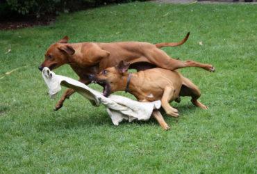 Анализы при подозрении на бешенство у собаки