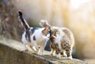 Камни в почках у кошек – симптомы, диагностика, лечение