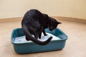 Симптомы камней в почках у кошек