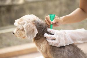 Капли от блох помогут устранить блох у собаки